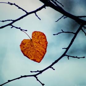 От есента ми остана само... ти