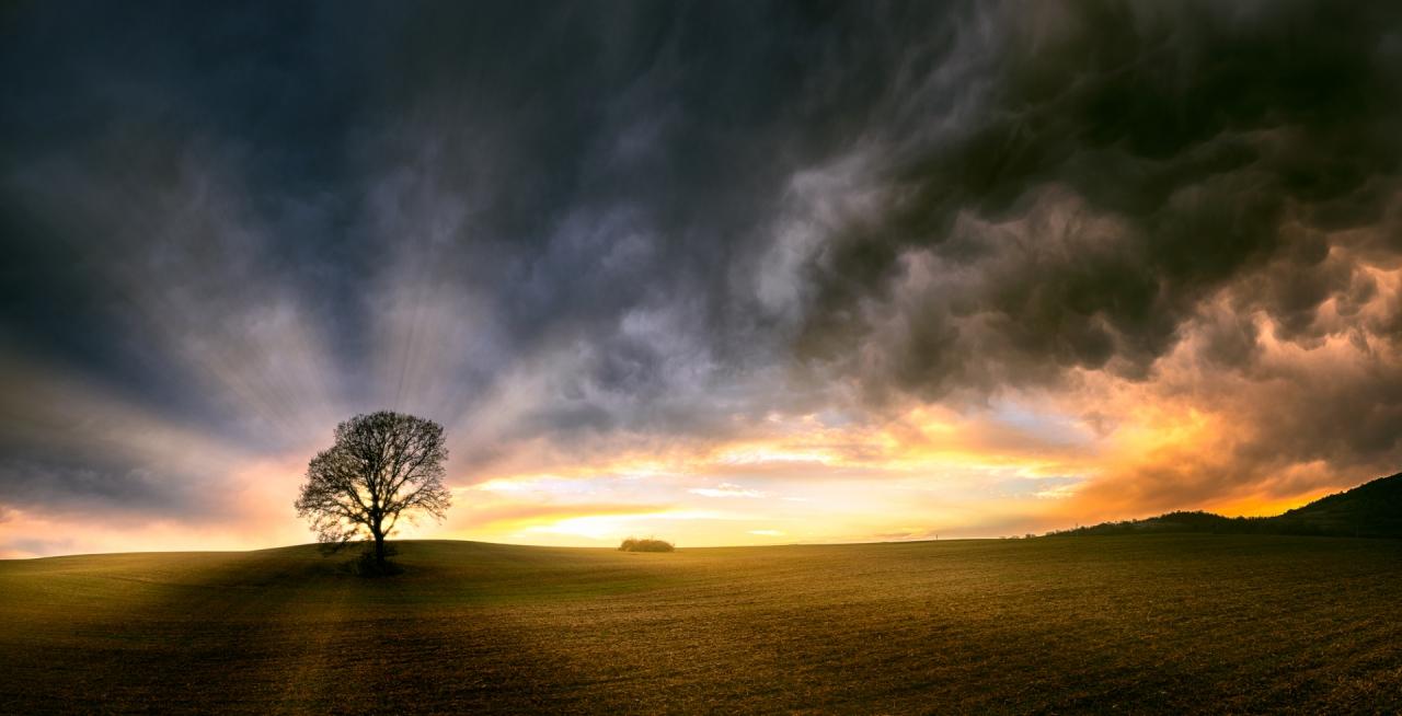 Дървото и залеза
