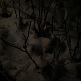 Зимен сьн на розите