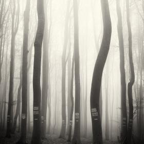 В мъгливата гора
