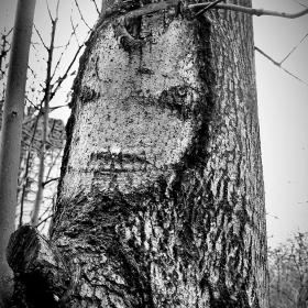Лицето на дървото