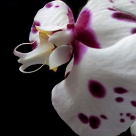 Орхидейно...
