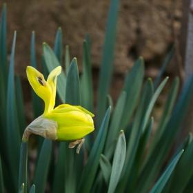 Предпролетно
