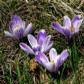 Пролетно