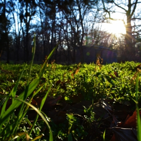 Срред тревата и листата..