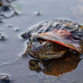 В окото на жабата или опит за автопортрет