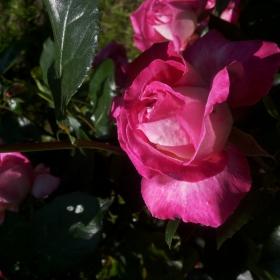 Подранила пролет