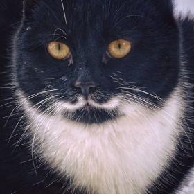 Селското котенце