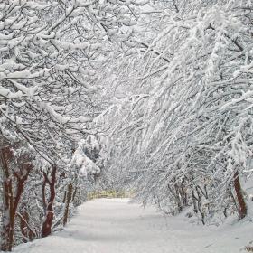 Зимата се завръща 2