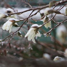 Дни преди началото на пролетта