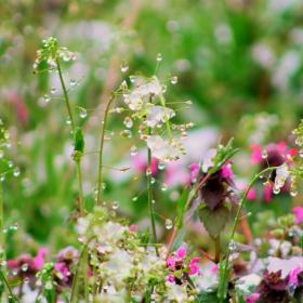 Пролетни тревички