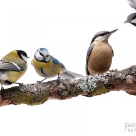 Птиците в двора