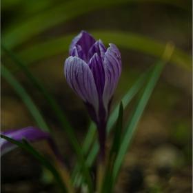 Пролетен цвят