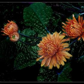 Хризантемите  по друг начин