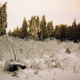 Зимата... един добър художник!