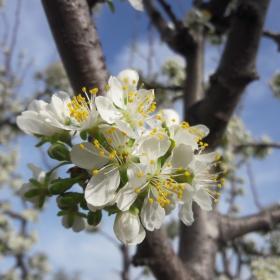 Ухание на пролет