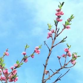 Пролет в небето