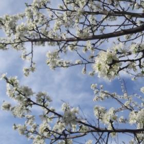 Някакво такова, пролетно