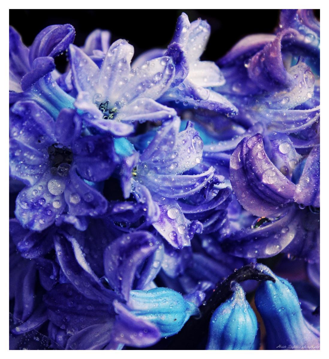 Пролетен аромат