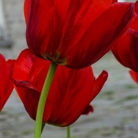 Прелест облечена в червено