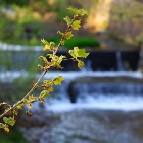 Край реката