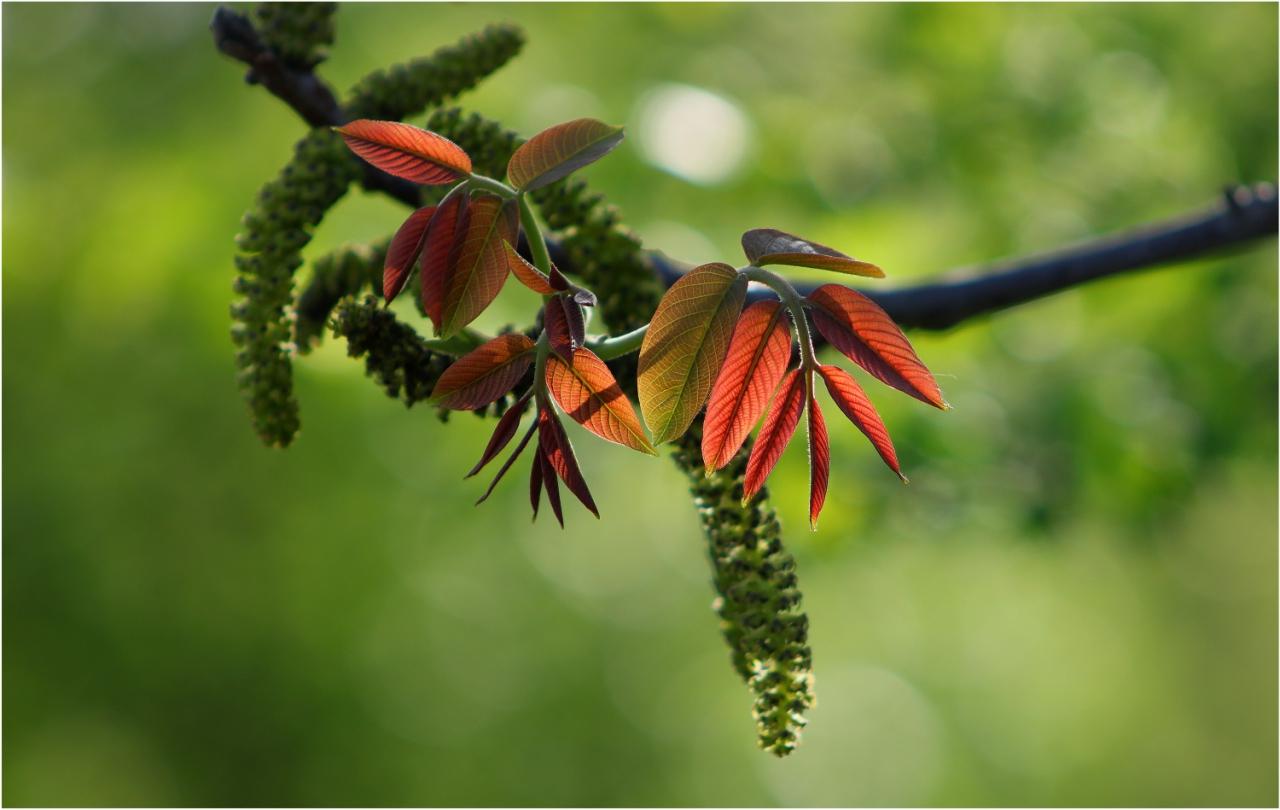 Пролетни багри