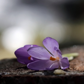 Пролет в Рила