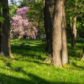 Пролет в парка