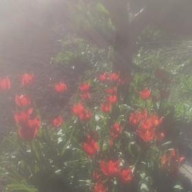 градината ми
