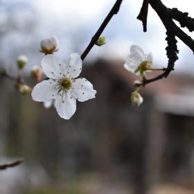 Пролет 2