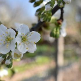 Пролет3