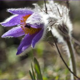 Пролет над резерват Острица