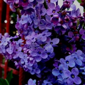 Небе в пролетни цветчета