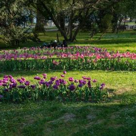 Пролет в парка 2