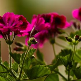 От градината на терасата