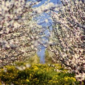 В прегръдката на пролетта