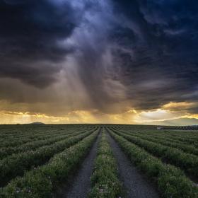 Преди да завали в Розовата долина