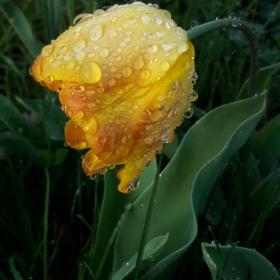 След дъжд