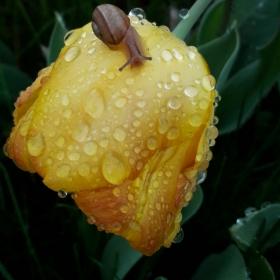 След дъжд... охлювче