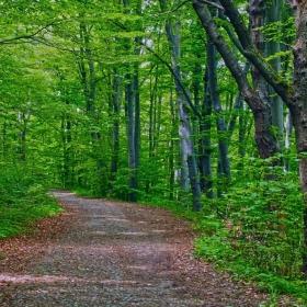Пейзаж в зелено