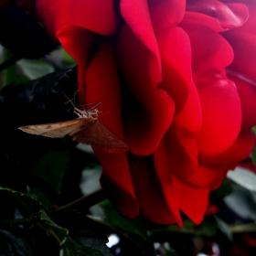 Кацнал на едно... цветче