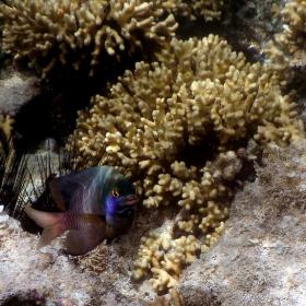 Подводни шарки