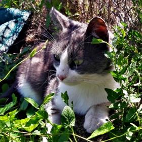 Котешки следобед