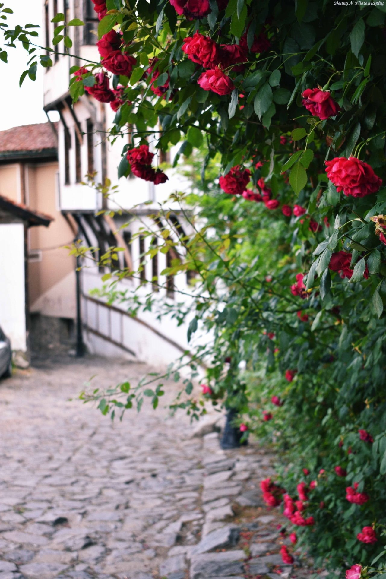 Розите в Старият град на Пловдив