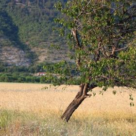 Поглед към черешовото дърво