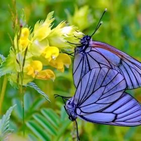 пеперуди и цветя