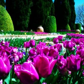Балчишка пролет