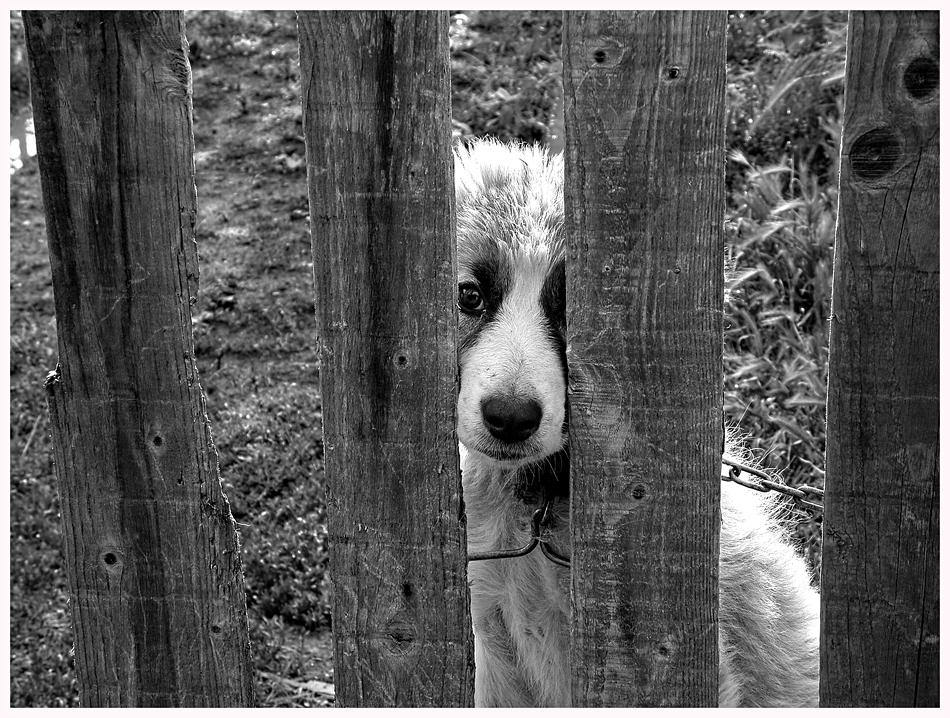 Зад оградата