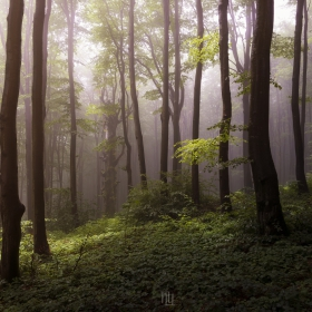 Вдън горите Тилилейски