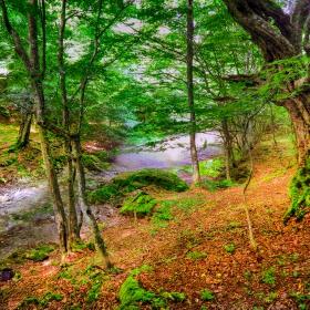На Странджа баир гората